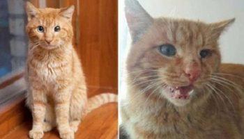 Бродячий кот частенько запрыгивал на окна к людям и смотрел в окошко в надежде на то, что его впустят домой