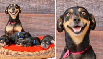 17 милых фото пушистых-родителей, которых прямо распирает от счастья