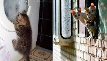 10 фотодоказательств того, как выглядит настоящее кошачье любопытство