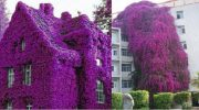 Самые красивые дома, которые просто утопают в цветах