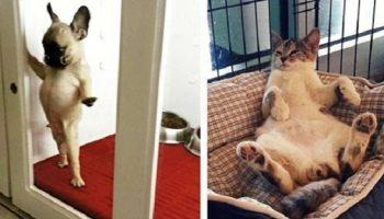 15 забавных фото, сделанных в приютах для животных