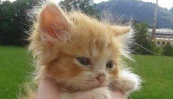 Крошечную кошечку нашли одну в лесу без мамы-кошки. И вот два года спустя!
