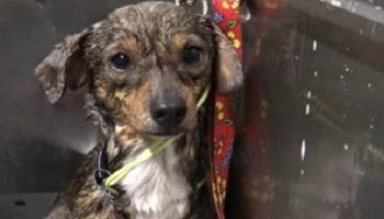 Грустный пес жил совсем рядом с железной дорогой, в опасной близости от поездов