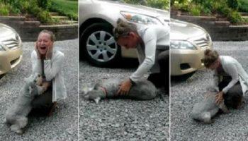 Видео как собака падает в обморок от счастья! Просто нечеловеческая радость после расставания!