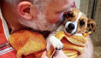 Мужчина искал свою собаку, но нашли ее два пса там где никто не ожидал!