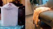 Коты — потрясающие создания, которые без особого труда помещаются в любой емкости