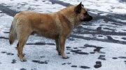 Собака два года скиталась на улице, пока местные жители не стали гнать его прочь