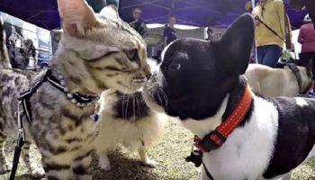Кот Бумер попал на выставку собак! Наверное, теперь ему несдобровать?