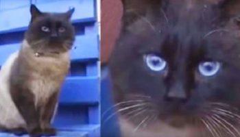Кота выкинули на остановку, но он не теряет надежды и ждет, верный как Хатико…