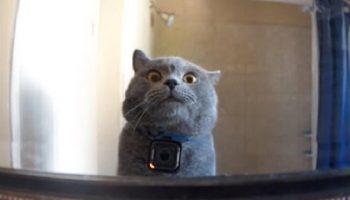 Вот, что делает кот дома, когда нет хозяина!