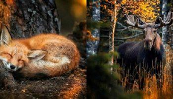 Сказочные фотографии из удивительных лесов Финляндии