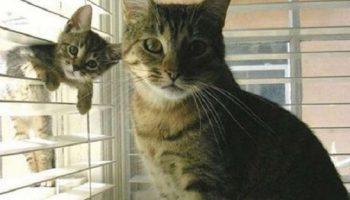 Милые кошки с котятами — «Я люблю тебя, малыш!»
