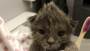 Девушка, прогуливаясь по улице, внезапно увидела маленького несчастного котёнка с милым хохолком на голове