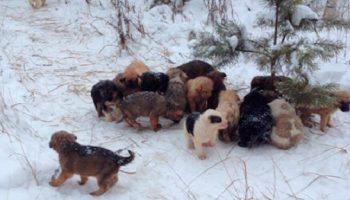 Мужчина нашел в зимнем лесу брошенных щенков