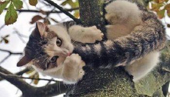 Как горе-спасатели спасали кота