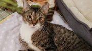 Особенная кошка появилась у крыльца мужчины. Человек не сразу понял, как она вообще ходит