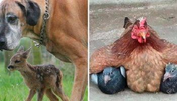 18 фото мамочек, которым подменили в роддоме детей