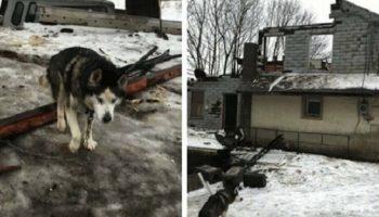 Собака просидела на цепи на улице больше 10 лет, и только случайность изменила его жизнь