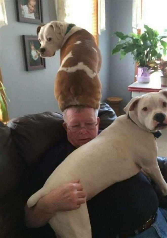 Собака на голове