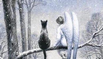 Трогательная сказка про кота и ангела