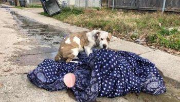 В канун Нового года хозяева выбросили собаку на улицу, но она не хотела оставлять свое одеяло