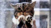 Кошка пришла в кафе попросить помощи для своих замерзающих котят