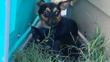Черный кот и небольшая черная собачка тесно прижались к друг дружке, спасаясь от осеннего холода.