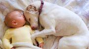 Собака, спасенная от плохих хозяев, боялась всех, кроме него… Этот 11-месячный малыш возродил в ней веру в людей!