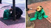 Девушка надела свою куртку на пса, чтобы он не замерз