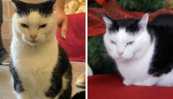 Приют опубликовал объявление: «Худшая кошка в мире» Пердита ищет заботливых хозяев