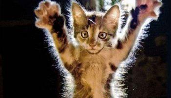 30 доказательств того, что кот в хозяйстве всегда пригодится