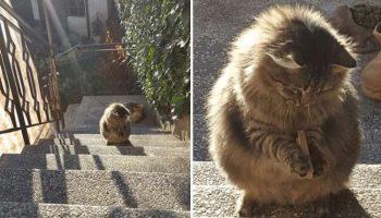 Угарные фото животных, которые поднимут вам настроение на весь день!