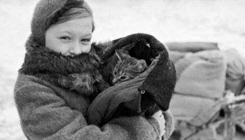 Блокадный кот Васька. Если бы не этот рыжий хулиган, бабушка с мамой умерли бы с голоду
