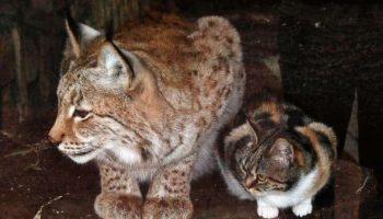 Бродячий кот забрел в зоопарк и нашел себе друга