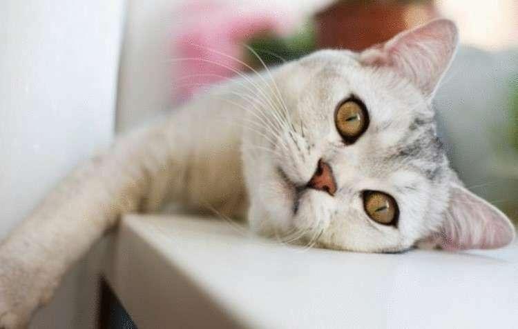 Котов невозможно не любить. И этому есть объективные причины.