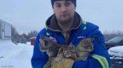 Мужчина увидел на снегу троих примерзших хвостиками к дороге котят. Он спас их при помощи кофе