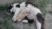 Кошка, будучи уверена в правильности утверждения, что чужих детей не бывает, принесла щенка домой