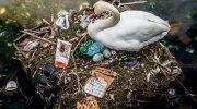10 ужасающих фотографий, после которых вы откажетесь от пластика