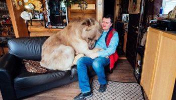 Этот медведь больше 20 лет живет, как домашний питомец. Посмотрите, как он ест!