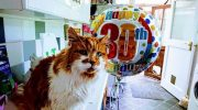 Котик по кличке Щебень отмечает свое 30-летие