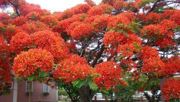 16 самых красивых деревьев мира. Невероятно!