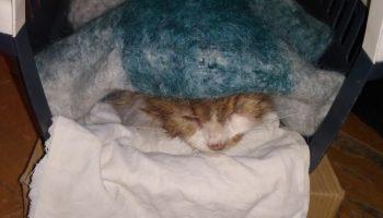 Парень перед новогодними праздниками спас кошку