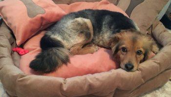 Собаку спасли от живодёров, она попала в приют. А там её обижали другие питомцы…