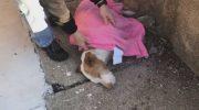 Собака упала в обморок и оказалась на морозе, начав замерзать