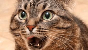 Очень забавная история про кота. Отличное-настроение гарантировано!