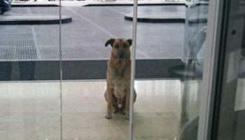 Стюардесса забрала к себе бездомного пса, он ждал ее 3 месяца у аэропорта