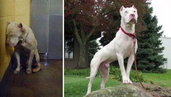 17 фото собак до и после приюта. Только взгляните в эти счастливые лица, а точнее, мордочки!