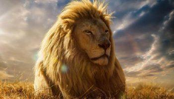 30 причин, почему нельзя жить без Львов