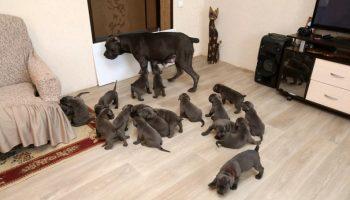 В Воронеже собака родила сразу 19 щенков и попала в Книгу рекордов