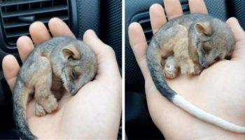 Очень милое зрелище, на которое можно смотреть бесконечно: спасение маленького зверька